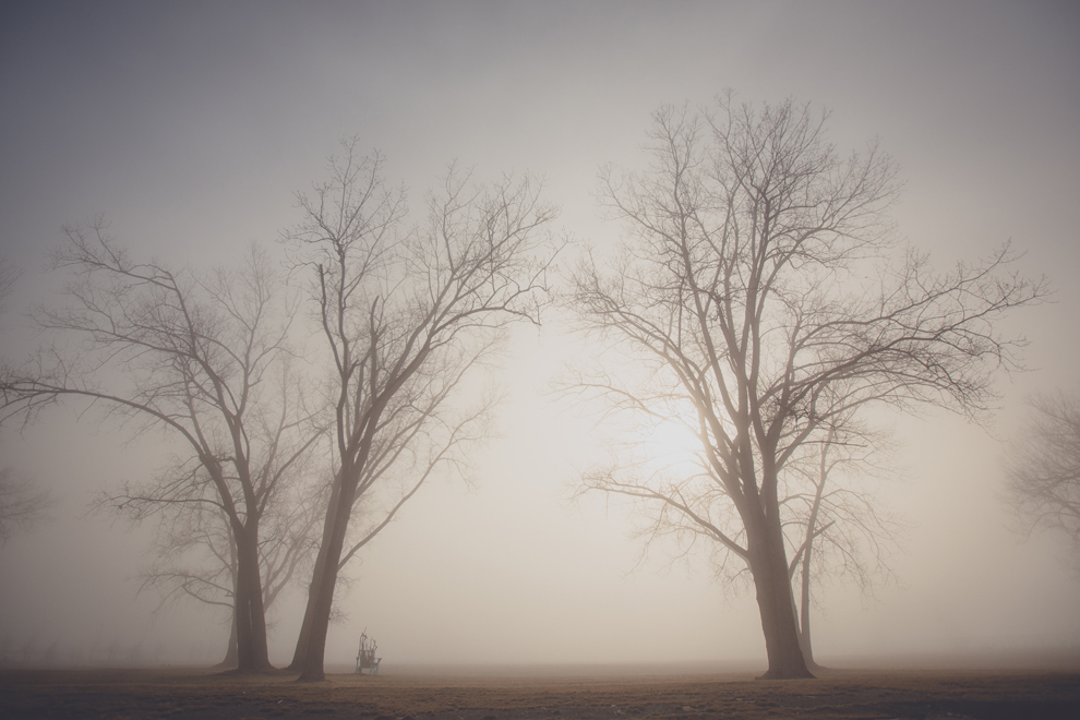 oversized adirondack chair made of sticks sits between two large trees on a foggy day at Buffalo