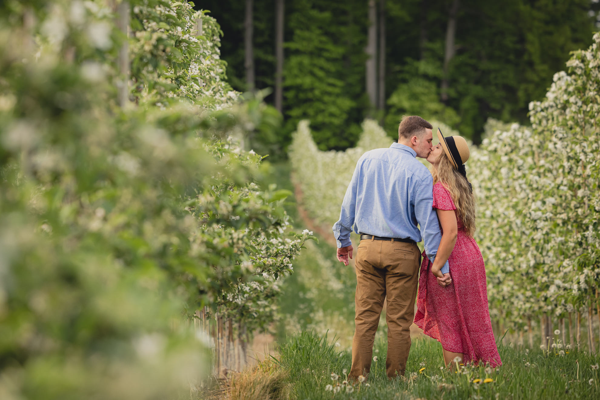couple kisses by walking through flowering trees during wedding engagement proposal photography in orchard in Niagara County